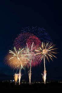 とりで利根川大花火のオープニングでワイドスターマインの写真素材 [FYI01646511]