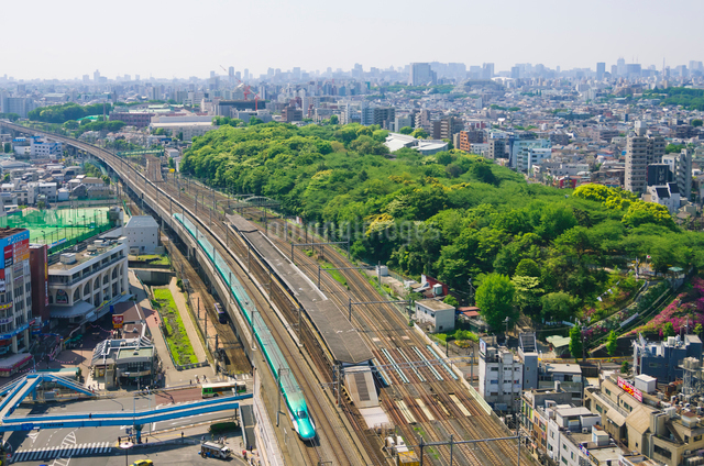 新緑の東京を走る東北新幹線はやぶさの写真素材 [FYI01646523]