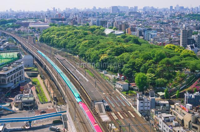 新緑の東京を走る東北新幹線はやぶさと秋田新幹線スーパーこまちの写真素材 [FYI01646569]
