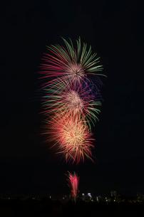 とりで利根川大花火のオープニングの写真素材 [FYI01646664]