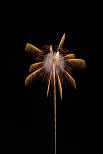 常総きぬ川花火大会の花火ミュージアムで昇り錦朴夕映えの椰子の写真素材 [FYI01646775]