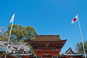 青空に富士山と富士山本宮浅間大社の楼門と桜の写真素材 [FYI01646921]