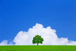 草原の一本の木と入道雲の写真素材 [FYI01647023]