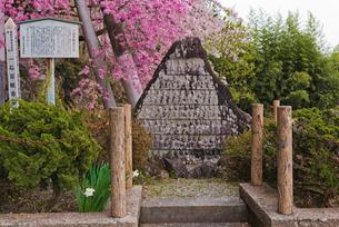 春の花咲く一石百観音石像の写真素材 [FYI01647033]