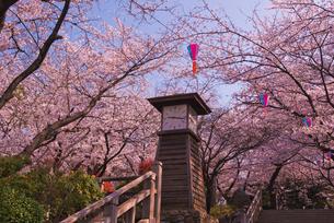 飛鳥山公園の桜と時計台 徳川吉宗享保の改革 日本最初の公園の写真素材 [FYI01647147]