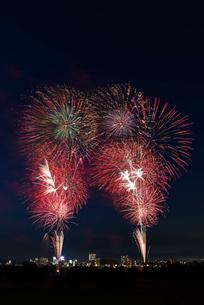 とりで利根川大花火 うちにねこがやってきたの写真素材 [FYI01647157]