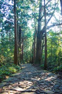熊野古道の写真素材 [FYI01647179]