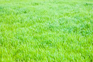草原の写真素材 [FYI01647204]