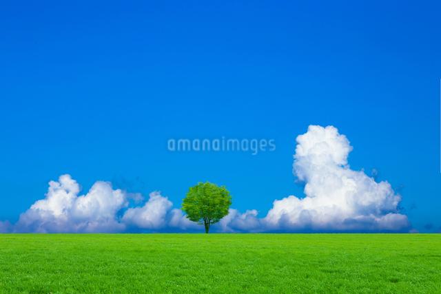 草原と青空に新緑の木の写真素材 [FYI01647236]