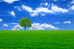 草原と青空に新緑の木の写真素材 [FYI01647244]