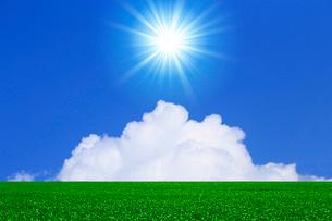 緑の草原と青空に太陽の写真素材 [FYI01647269]