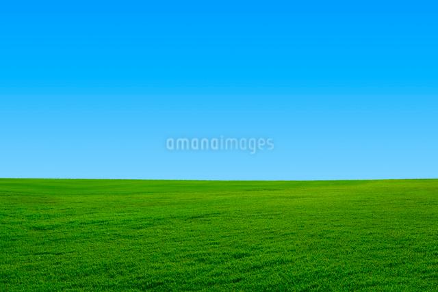 緑の草原と青空の写真素材 [FYI01647299]