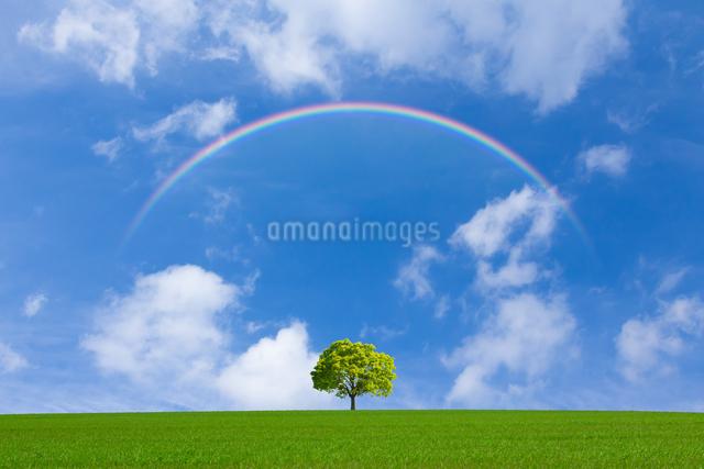 草原と青空に太陽の写真素材 [FYI01647478]