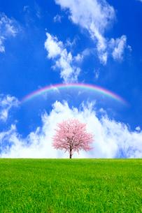 草原と青空に桜の木の写真素材 [FYI01647524]