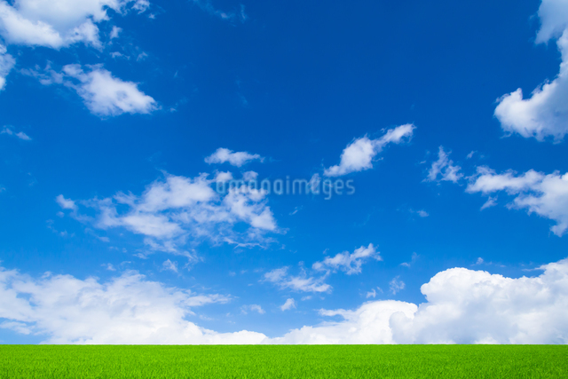 緑の草原と青空に雲の写真素材 [FYI01647545]
