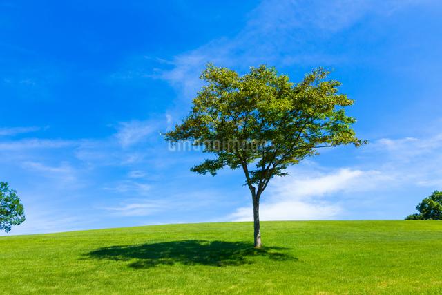草原と青空に新緑の木の写真素材 [FYI01647554]