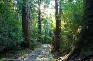熊野古道の写真素材 [FYI01647575]