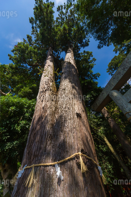 産田神社の写真素材 [FYI01647598]