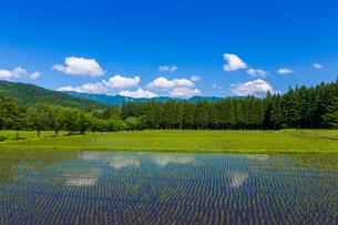 初夏の水田の写真素材 [FYI01647615]