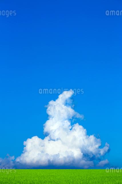 緑の草原と青空に雲の写真素材 [FYI01647631]