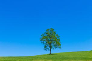 緑の草原と新緑の木の写真素材 [FYI01647705]