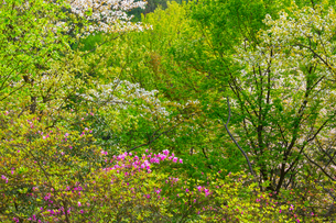 春色の雑木林の写真素材 [FYI01647729]