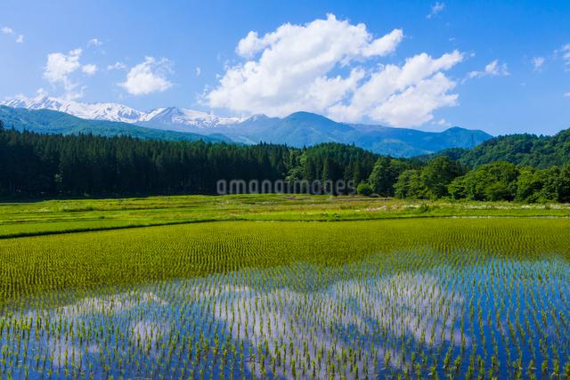 初夏の水田の写真素材 [FYI01647736]
