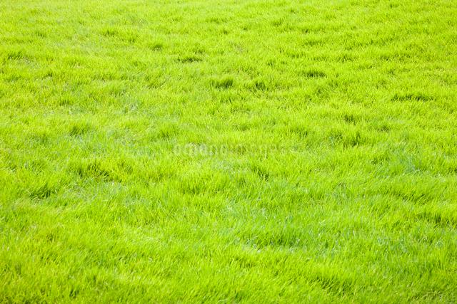 芝生の写真素材 [FYI01647769]