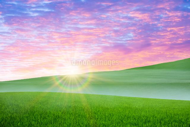 草原と朝日の写真素材 [FYI01647770]