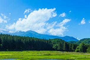 初夏の水田の写真素材 [FYI01647896]