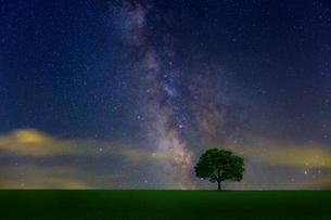 星空と草原の木の写真素材 [FYI01647929]