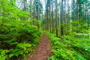 森の小径の写真素材 [FYI01647986]