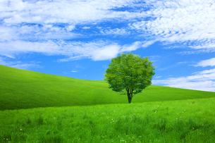 草原に新緑の木の写真素材 [FYI01648587]