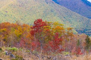 秋の一の瀬の写真素材 [FYI01648818]