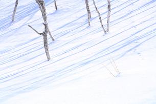 雪面と木の陰の写真素材 [FYI01648916]