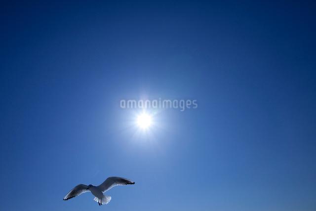 太陽とカモメが一羽の写真素材 [FYI01649002]
