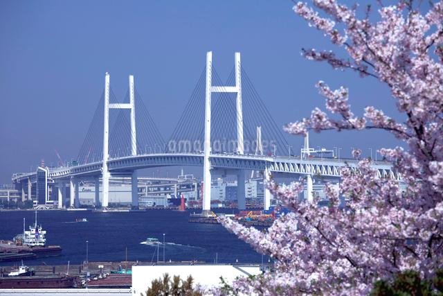 さくらと横浜ベイブリッジの写真素材 [FYI01649013]