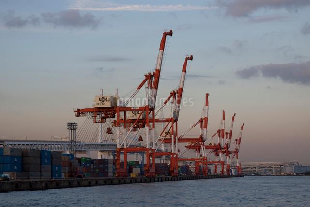 横浜のコンテナ埠頭とクレーンの写真素材 [FYI01649096]