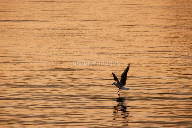 夕方の海とカモメの写真素材 [FYI01649145]