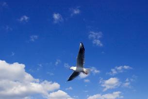 青い空と白い雲に1羽のカモメが飛ぶの写真素材 [FYI01649269]