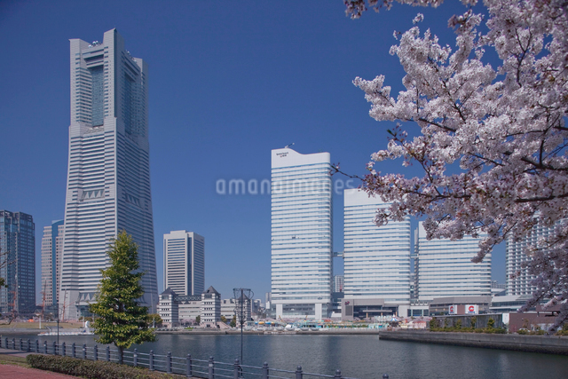 春のさくらのランドマークタワーの写真素材 [FYI01649394]