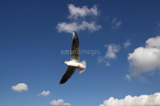 青い空とカモメの写真素材 [FYI01649569]