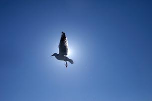 カモメと太陽の写真素材 [FYI01649628]