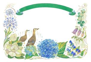 6月をイメージした花とカルガモとリボンの飾りのイラスト素材 [FYI01653932]