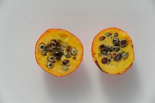 イイギリの果実の写真素材 [FYI01654806]