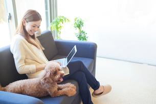 犬を見つめる笑顔の女性の写真素材 [FYI01655886]