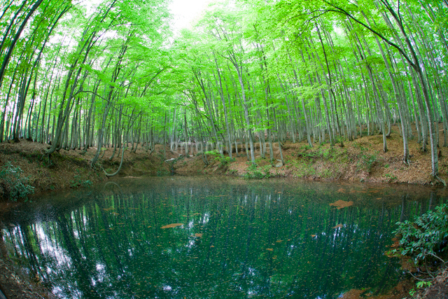 新緑の林と池の写真素材 [FYI01656568]