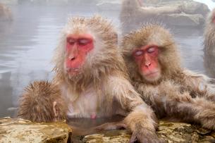 地獄谷野猿公苑 露天風呂と猿の写真素材 [FYI01656744]