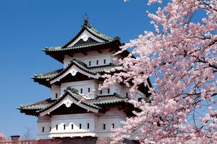 弘前城公園の弘前城天守閣と桜の写真素材 [FYI01656752]