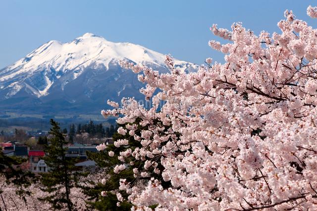 弘前城公園の桜と岩木山の写真素材 [FYI01656771]